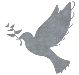 hope nature peace faith animal wing sign spirit love religion freedom fly dove bird symbol pigeon feather peaceful purity flight design flying