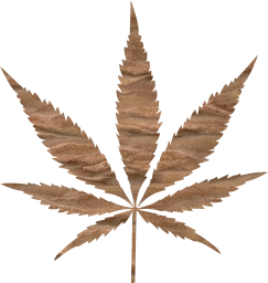 marijuana cut healing weed out nature abuse ganja drug addiction culture cannabis medicine smoke pot plant legal medical joint medicinal hemp illegal herb leaf herbal narcotic agriculture health natural grass isolated hash farm