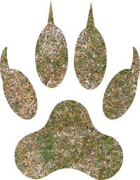 paw animal wildcat footprint lion predator tiger wolf