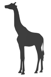 illustration neck isolated drawing long giraffe