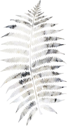 fern eco organic leaves leaf ecology plant