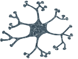 cell biology neuron circle nucleus brain