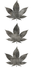leaves cannabis three
