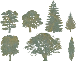 beech oak pine fir woods shapes walnut various trees gallery maple identification isolated variety