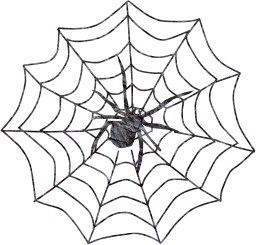 creepy spider arachnid symbol web insect sticky isolated spooky scary pattern danger net cobweb thread