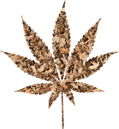 marijuana roll hungry organic weed cancer abuse ganja forbidden addiction cannabis medicine smoke pot leaves prescription crop plant foliage risk joint farming hemp bud illegal mary leaf herbal narcotic agriculture burn high thc grow hashish natural grass habit hash hippie