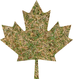 canada fall symbol nature canadian flag national patriotism nation environment leaf season autumn patriotic maple design foliage